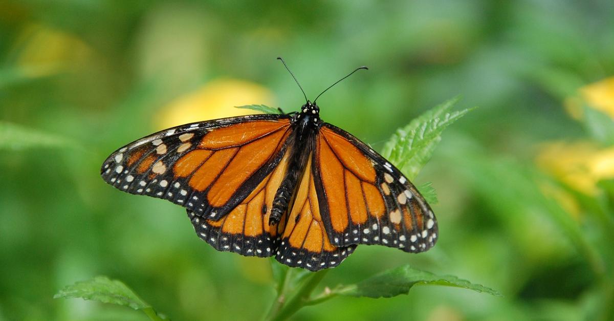 ButterflyFlight.png
