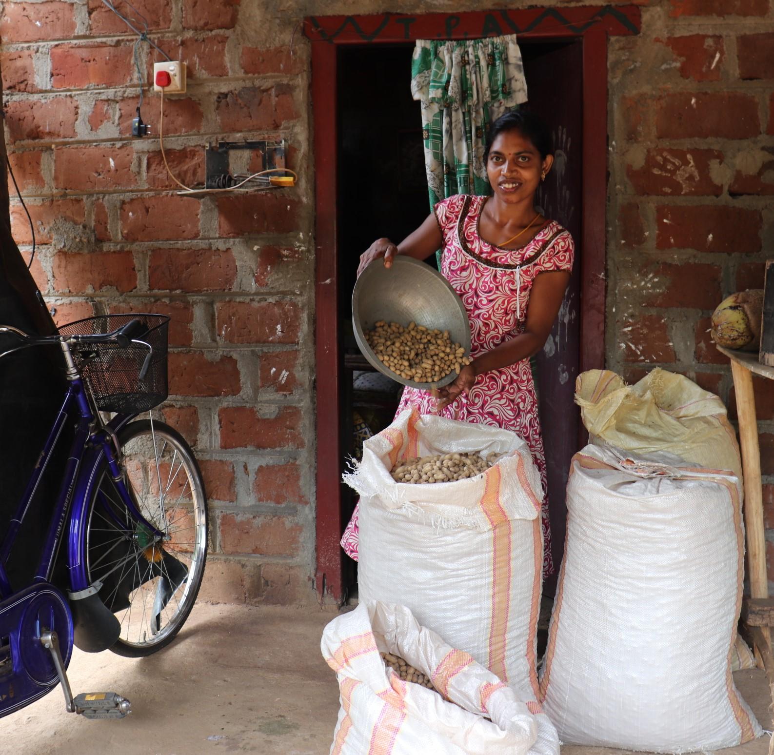 Sri Lankan farmer with peanut harvest