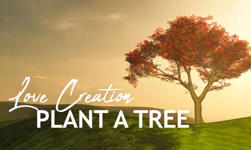 TreePlantcampaign.jpg
