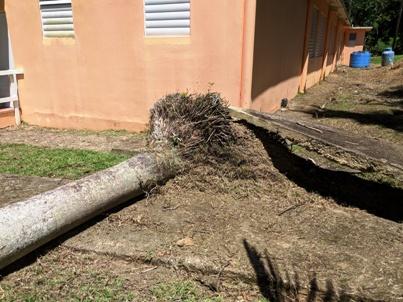 Uprooted_tree.jpg