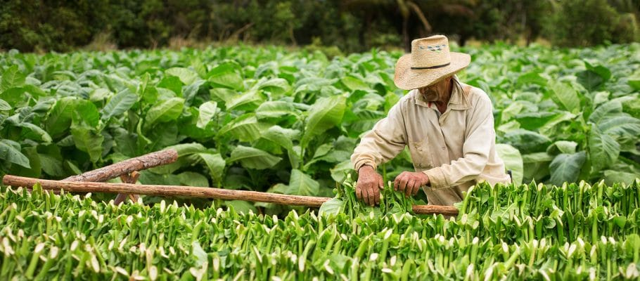 Faith groups standing with tobacco farm workers in fight for basic workplace rights
